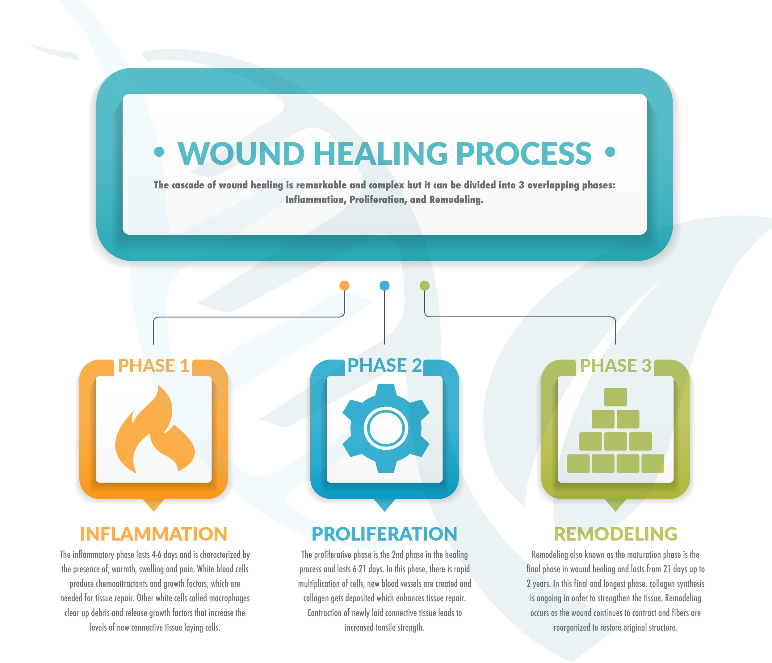 The Biology of How Prolotherapy Works